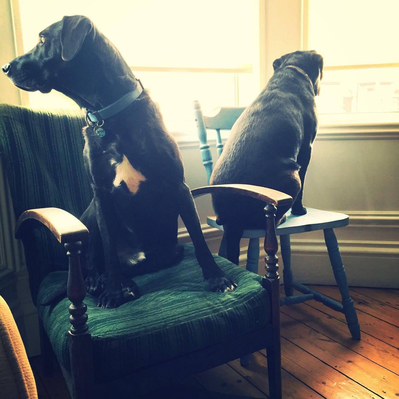 Milo and Bella Relocated to the United Kingdom